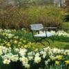 Без розуму від весни частина перша: рання весна