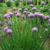 Які рослини краще садити навесні, а які восени