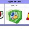 Основні типи клітин