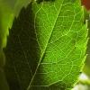 Речовини рослинного походження, що попереджають розвиток раку